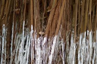 paul-tocatlian-2016-vietnam-hanoi-museum-ethnology-tree-roots
