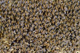 paul-tocatlian-2016-vietnam-saigon-mekong-delta-bees